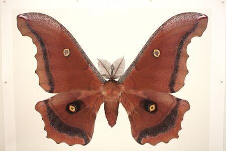 specimen: Butterfly specimen exhibition