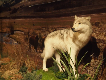 lifelike: Taxidermy in the museum Editorial