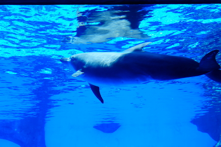 aquarium visit: dolphin Editorial