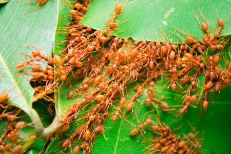 cohere: Ant nest