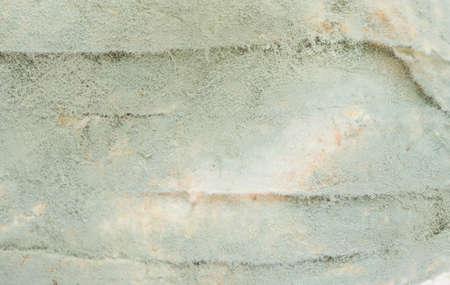 만료 예정인 썩은 빵. 스톡 콘텐츠 - 41582538