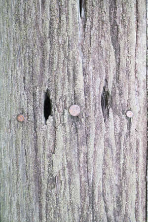 Photos background from old wooden floor. Stock Photo
