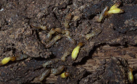 alarmed: Termites are alarmed because the nest was destroyed.