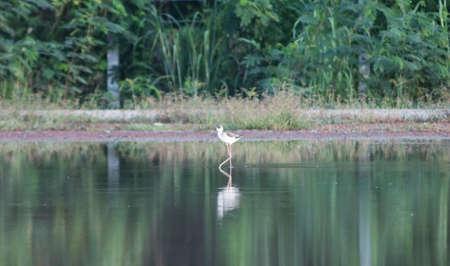 bird feet: Birds were walking in puddles.