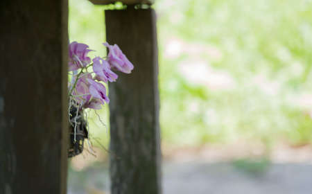 purple orchid: Purple orchid hanging beside an old wooden staircase. Stock Photo