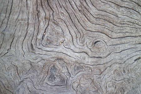 arboles secos: Fotos de superficie �rboles muertos secos.