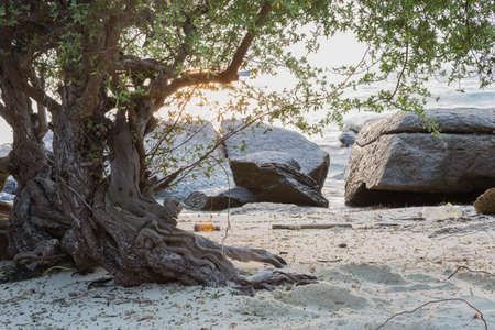 koh samet: Tree on the beach on the island.