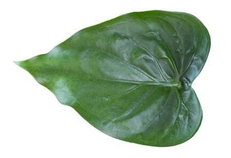 araceae leaves Stock Photo