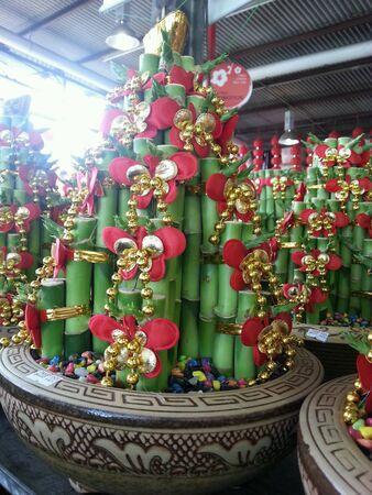 lucky bamboo: Lucky bamboo Stock Photo
