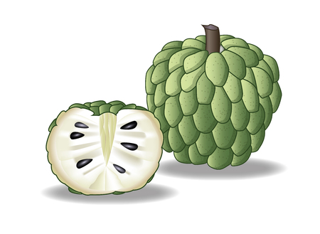 custard apple fruit: custard apple design
