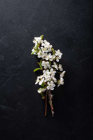 Flowering tree branch on a black background. Cherry flowers. Beauty and spring concept