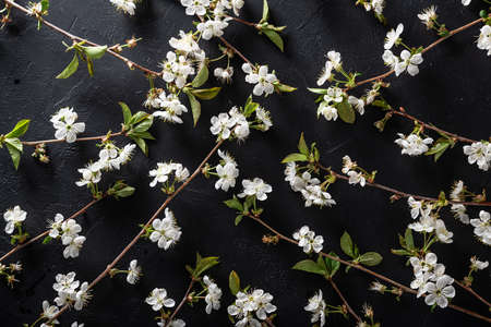 Blooming cherry branches on a black background , pattern.