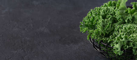kale leaves on a dark background, place for text