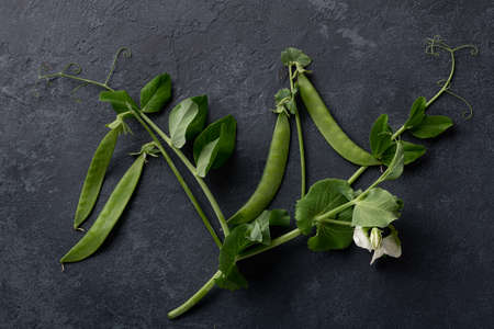 pea sprouts with pods on on black background, top view