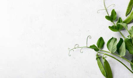 pea sprouts with pods on white background, top view, copy space Reklamní fotografie