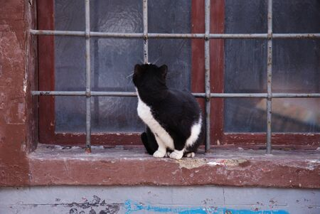 cat at the grating window Stock Photo - 11406715