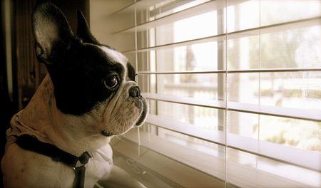 犬を見てください。 写真素材