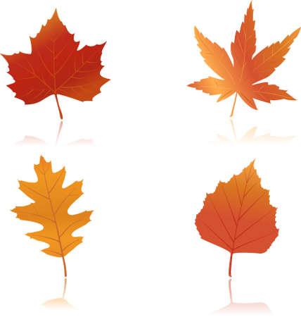 Illustrazione Vettoriale di aceri, querce e spiaggia foglie in autunno colori