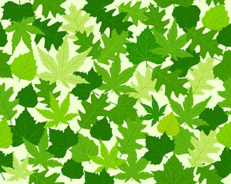 haya: Modelo sin fisuras con el roble, el arce, el haya y el casta�o hojas en distintos tonos de verde. 8 colores mundial.
