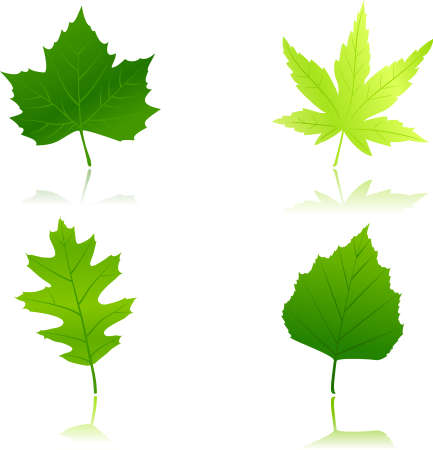 Maple, chestnut, oak and beach leaves in different shades of green. Use of 12 global colors and linear gradients. Vector