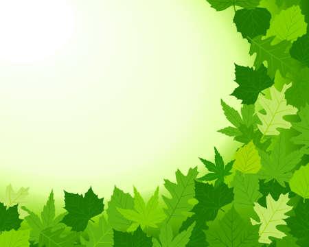 haya: Horizontal primavera con antecedentes haya, arce, roble y casta�o hojas y la parte inferior y derecha. Copiar espacio para el texto. Utilizaci�n de mezclas (bg) mundial y 10 colores.