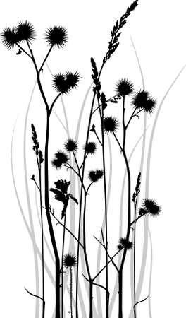 distel: Graustufen Vektor Silhouette von Gras Klingen mit Bur. Illustration