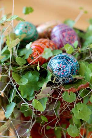 varicoloured: Varicoloured huevo de Pascua, en lyings planta verde
