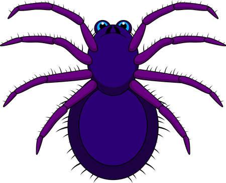tarantula: Tarantula Cartoon