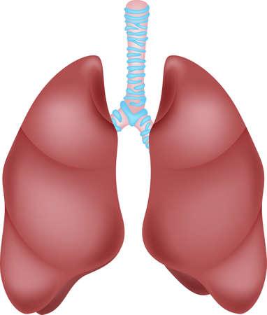 Human lung anatomy Illustration