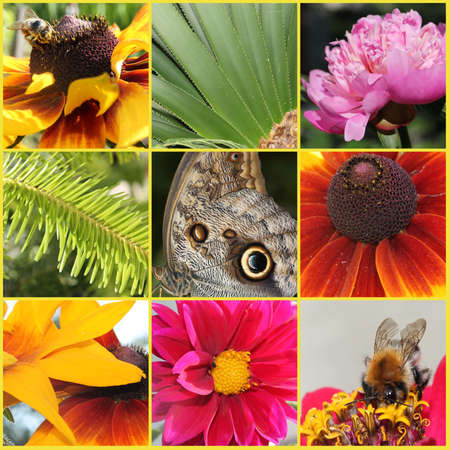 Flowers and insect collage photo
