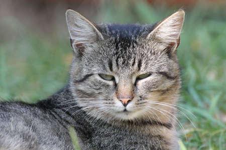 Tabby cat in the garden, detail of head