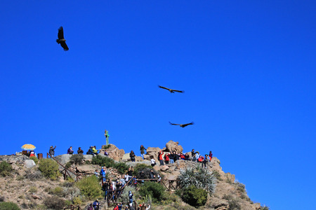 People looking at the condors soaring in the sky at cruz del condor. Colca canyon - one of the deepest canyons in the world, near the city of Arequipa in Peru. Stock Photo