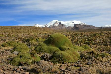 nevado: The three peaks of volcano coropuna in the andean mountains of Peru, near cotahuasi canyon