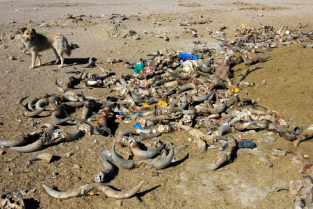 disposed: Waste laying everywhere in Bolivia, near Uyuni train graveyard