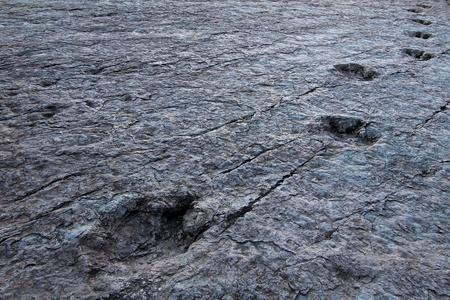 Huge dinosaur footprints, valley of Maragua, Bolivia