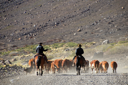 Gauchos and herd of cows, Patagonia, Argentina 免版税图像
