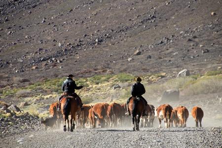 Gauchos y rebaño de vacas, Patagonia, Argentina