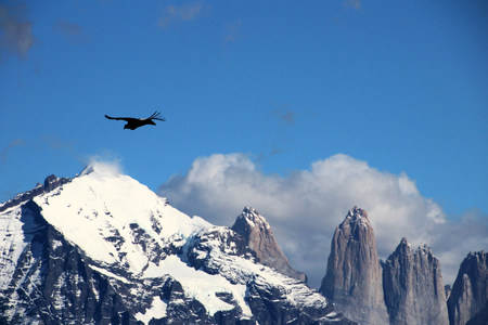 first day: Andean condors fly in Parque Nacional Torres del Paine in Chile Stock Photo
