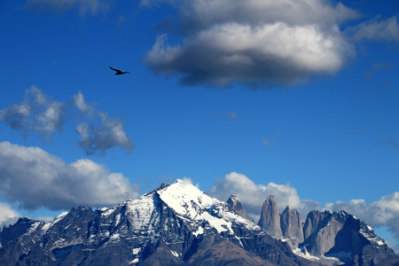 Andean condors fly in Parque Nacional Torres del Paine in Chile Stock Photo