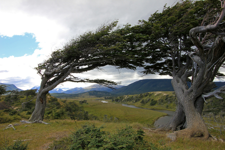 Tree deformed by wind on Tierra del Fuego, Patagonia, Argentina Stock Photo