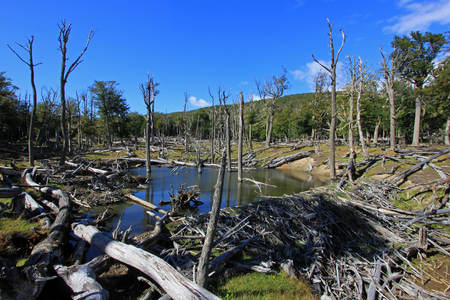 Beaver dam, Tierra Del Fuego, Patagonia Chile Stock Photo