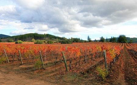 Colorful wineyard in middle Chile, South America Stock Photo