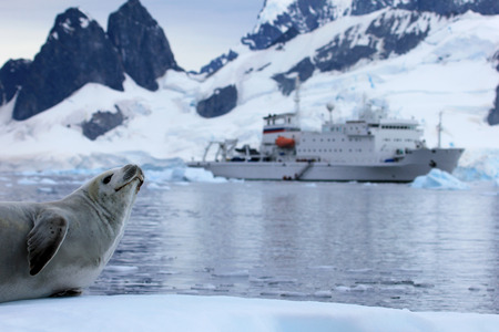 Seal in front of ship, boat, Antarctic Peninsula, Antarctica Фото со стока