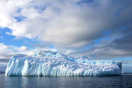 Kelp Gulls and Arctic Terns flying and sitting on iceberg, Antarctic Peninsula, Antarctica Reklamní fotografie