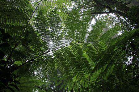 Cloud forest of Reserva Biologica Bosque Nuboso Monteverde, Costa Rica, Central America Imagens