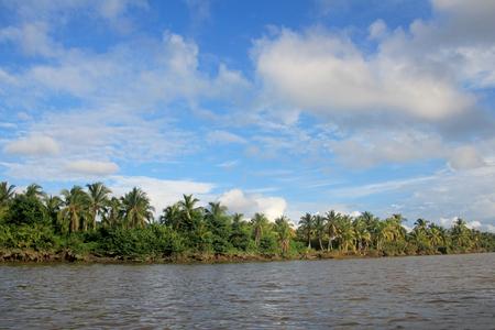 Coconut palm trees, Cayapas River, Esmeraldas province, Ecuador South America Banco de Imagens