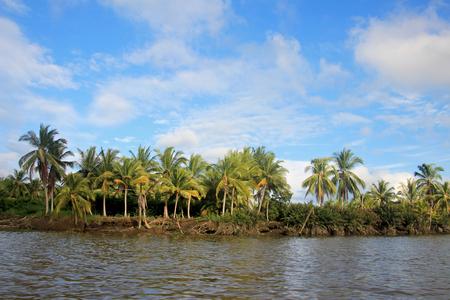Coconut palm trees, Cayapas River, Esmeraldas province, Ecuador South America Banco de Imagens - 89511225