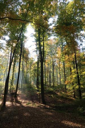 Autumn fall forest trees, in beautiful colors, Switzerland, Europe Foto de archivo