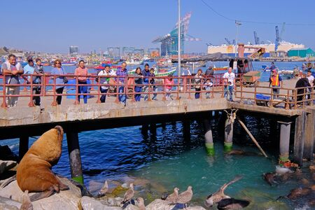 SAN ANTONIO, CHILE, APRIL 14, 2018: Tourists watching the sea lion at the colorful harbor port of San Antonio and the City, Valparaiso, Chile, South America on April 14, 2018 Editorial