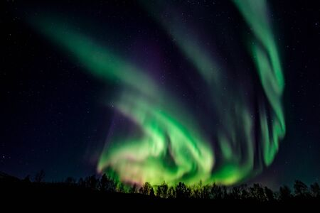 Intensywna zorza polarna, Aurora Borealis, nad lasem w pobliżu Lakselv, Porsanger, Finnmark, Norwegia Europa